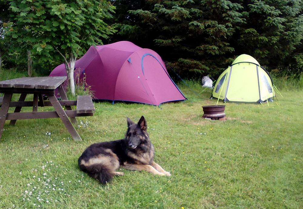 NorthRhinns Dog Friendly Campsite