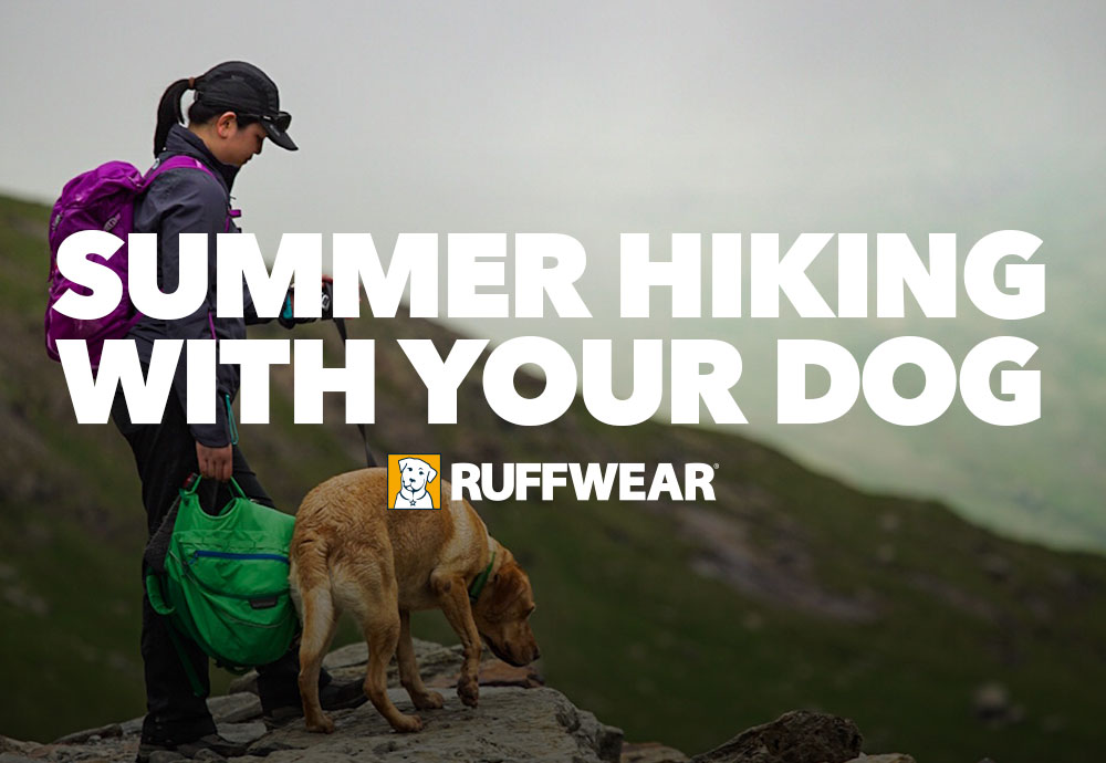 Beginners Guide to Summer Hiking with Your Dog